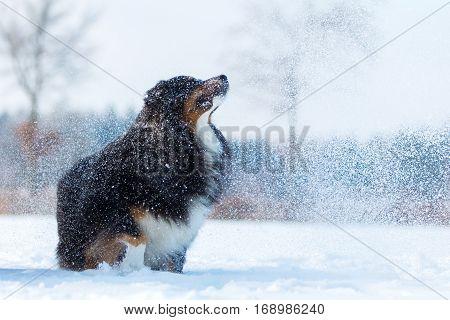 Dog In A Snow Fog