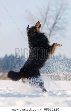 Dog Is Jumping In The Snow
