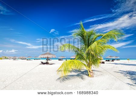 Beach with coconut palms and deckchairs on a small island resort in Maldives, Indian Ocean. Holidays destination
