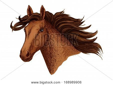 Arabian brown horse. Vector mustang stallion head. Symbol for horse races or racing sport. Wild mare with wavy mane for equestrian horserace club, equine animal riding contest or exhibition poster