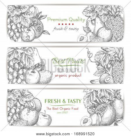 Fresh tasty fruits. Vector sketch banners set of fruits white or green grape bunch, apple and juicy pomegranate, apple, apricot and pear, tropical pineapple, orange and exotic kiwi with citrus lemon. Best natural healthy organic farm fruits design