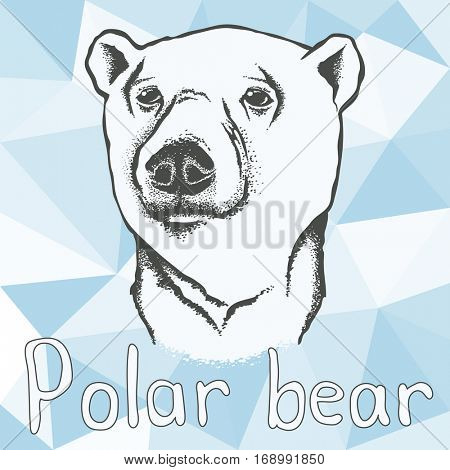Polar bear vector illustration. Polar bear. Illustration of polar bear