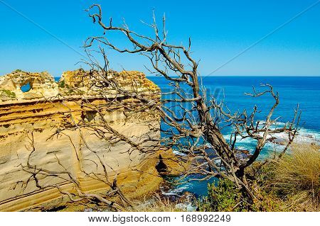 The Razorback behind a dry branch at the Twelve Apostles on the Great Ocean Road in Victoria, Australia