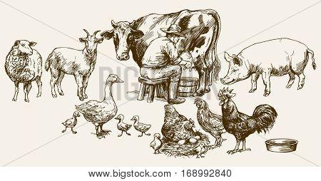 Farmer milking his cow. Farm animals.