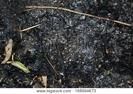 Photograph of ash after a forest fire