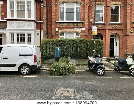 LONDON - JANUARY 10: Used Christmas Trees dumped in the street after Twelfth Night on January 10, 2017 in Fulham, London, UK.