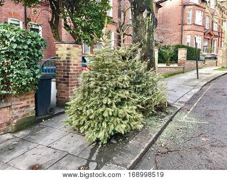 Used Christmas Tree dumped in a London Street on Twelfth Night