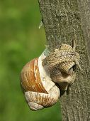 snail on a wooden peg 0810_60 poster