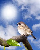 Sitting sparrow below sunny sky poster