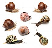 Snails collection on white background poster