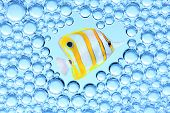 Picture of a tropical fish. poster