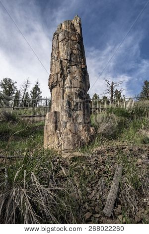 Petrified Tree Panorama View In Yellowstone National Park