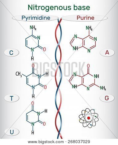 Chemical Structural Formulas Of Purine And Pyrimidine Nitrogenous Bases: Adenine (a, Ade), Guanine (