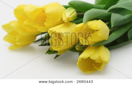 Pretty Yellow Tulips