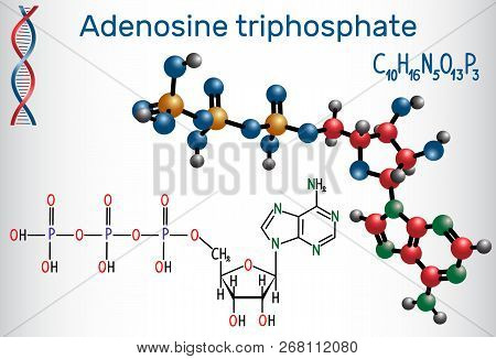 Adenosine Triphosphate (atp) Molecule, Is Intracellular Energy Transfer And Required In The Synthesi