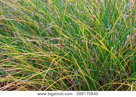 Background Of A Green Grass, Background Of A Green Grass. Green Grass Texture Green Grass Texture Fr