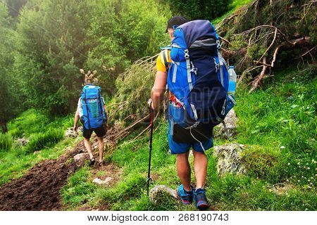Hiking In Mountains. Tourists With Backpacks Hike On Wild Trail. Trekking In Forest