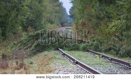 Trees Across A Railroad Line In North Carolina After Hurricane Florence