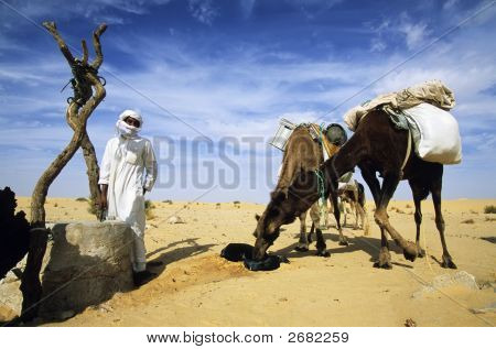 Desert beduin with two camels drinking the water of a sahara desert well; Algeria Africa. poster