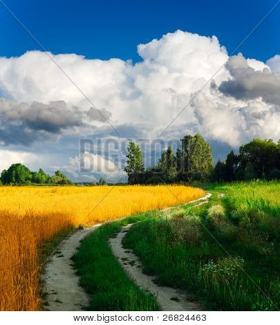 Country road through the wheaten field