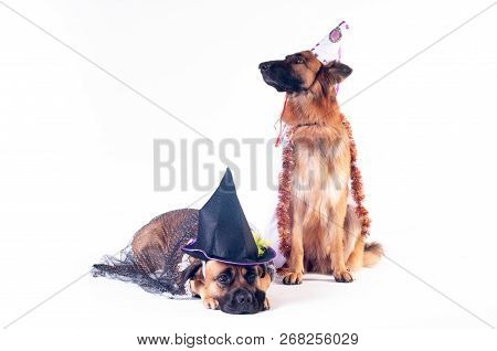 Two Big Dogs Cane Corso And German Shepherd On White Background In Costumes Of Wizard In Caps