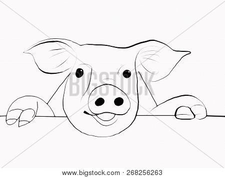 Brush Template. Pig Muzzle. Sketch. Symbol Of The Year 2019.