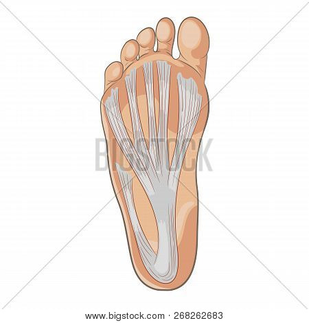 Foot Sole Illustration For Biomechanics, Footwear, Shoe Concepts, Medical, Health, Massage And Spa C