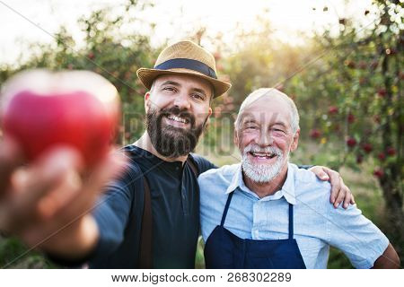 A Senior Man And Adult Son Standing In Orchard In Autumn, Holding An Apple.