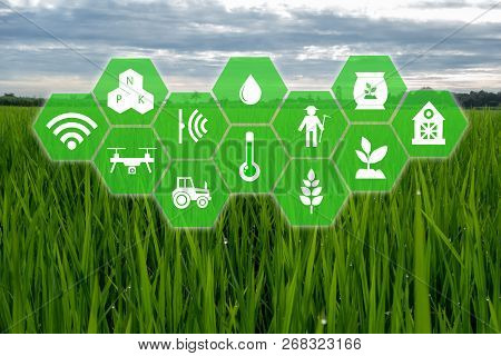 Iot, Internet Of Things,farmer Agriculture Concept, Smart Farm With Robotic Icon (artificial Intelli