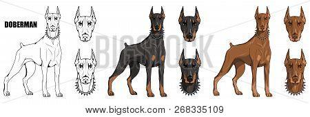 Doberman Pinscher, American Doberman, Pet Logo, Dog Doberman, Colored Pets For Design, Colour Illust