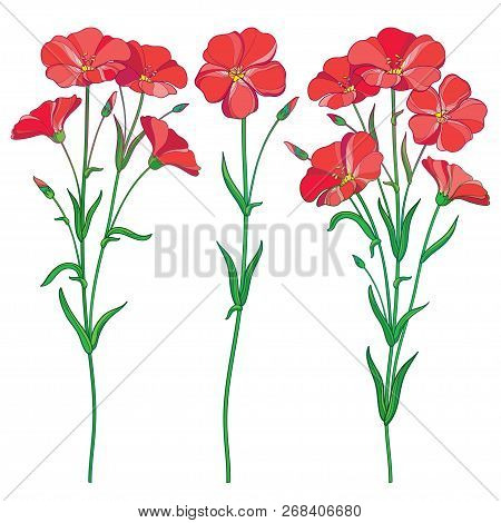 Vector Set With Outline Red Flax Plant Or Linseed Or Linum Flowers Bunch, Bud And Green Leaf Isolate