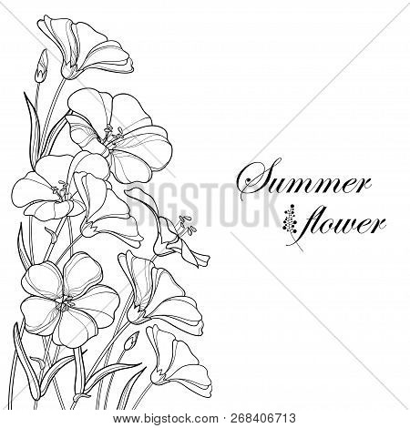 Vector Corner Bouquet With Outline Flax Plant Or Linseed Or Linum. Flower Bunch, Bud And Leaf In Bla