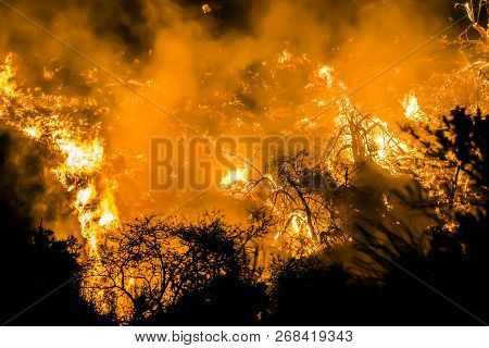 Bright Orange Flames Burning Hillside In Close Up Image Of California Fires.