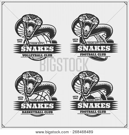 Volleyball, Basketball, Soccer And Football Logos And Labels. Sport Club Emblems With Snakes.