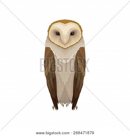 Flat vector icon of barn owl. Nocturnal bird with brown feathers and hooked beak. Wild flying creature. Fauna theme poster