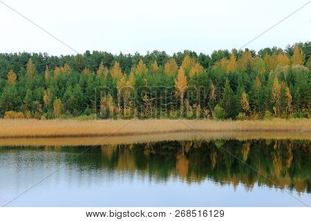 Beautiful autumn yellow forest reflected on the water. Yellow autumn trees. Autumn nature. Russian forest. The northern forest. Nature Reserve. The autumn yellow woods. Lake in autumn forest. Autumn forest reflected in the lake. Autumn landscape