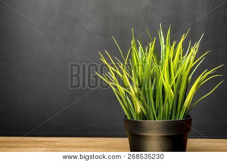 Green Houseplant On The Desk At School. Oxygen In The Room. On The Background Of An Empty Board.