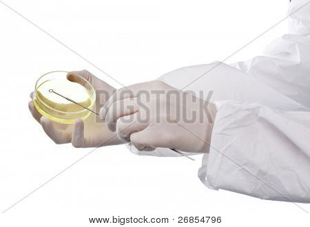 Scientist holding an agar plate which is growing E.coli