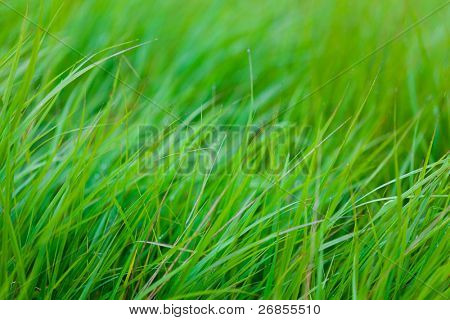 Background of fresh grass, shallow depth of field, soft areas for type legibility.