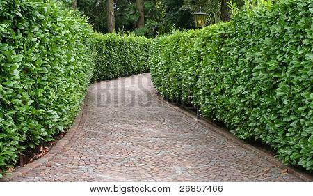stone pathway, between green hedge