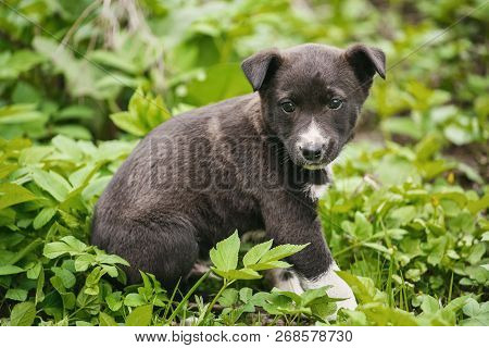 Young Puppy Dog Photographed Outdoors. Help For Homeless Animals.