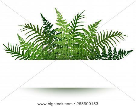 Fern Frond Frame Vector Illustration. Polypodiophyta Plant Leaves Decoration On White Background. De