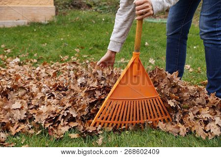 Autumn Work In The Garden. Hand-cleaning Of Leaves With Hands And Rakes.