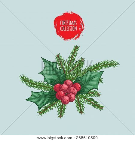 Christmas Plants Bouquet. Holly Berries And Fir Tree Branches. Holiday Decoration Element. Hand Draw