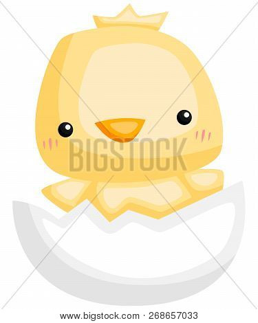 A Vector Of A Chick Hatching From An Egg