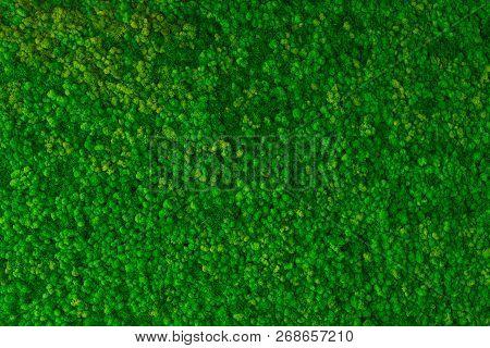 Artificial Green Moss Wall For Garden Decor. Moss Background Texture