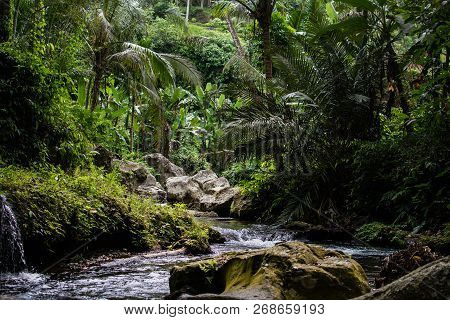 River In Stones Of Tropical Jungle Nature At The Banner Image. Jungle Nature Of Bali Island. Nature