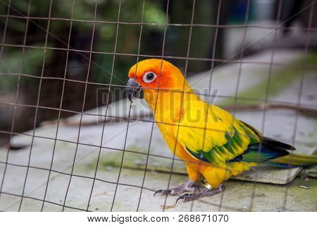 Cute Parrot Bird In Cage