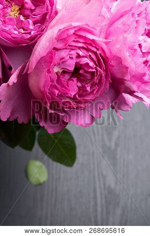 Pion-shaped Roses, A Bouquet Of Pion-shaped Roses On Grey Background, Pink Pion-shaped Roses. Gift F