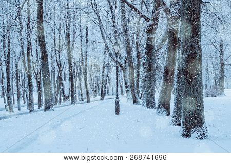 Winter landscape with falling snowflakes - wonderland winter park with snowfall. Snowy winter landscape scene. Winter park alley